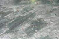 Silver Grey Honed Натуральный полированный сланец