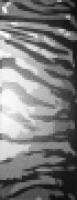 7064 Тигр черный 20x50