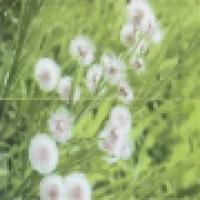 Панно цветы заказать JAS66916MHR-AB 60х60 см