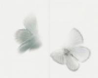 Декор Dayflight Grey TD2/022 40х50 см